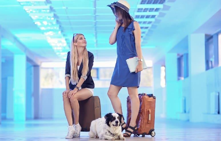 Best Travel Dog.